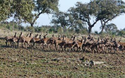 ¿Cómo controlamos la sobreabundancia de ciertas especies de fauna silvestre en los parques nacionales?.