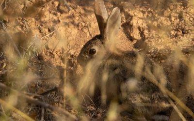 FEDEXCAZA financiará cuatro proyectos de investigación centrados en la recuperación de la caza menor.