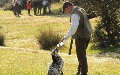 La FAC trabaja en el Anteproyecto de Ley de Bienestar Animal de Andalucía.