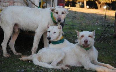 Se desmonta la campaña animalista contra los perros de caza