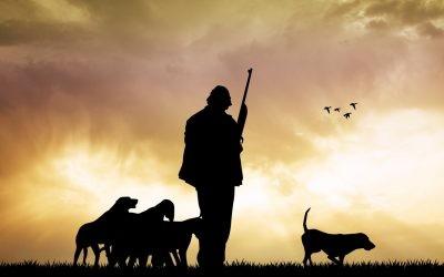 CLM: El sector cinegético pide cambiar más del 40% de los artículos del reglamento de la ley de caza.
