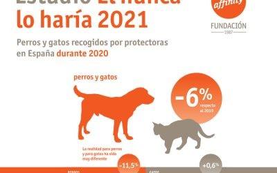 La FAC alerta de que el incremento en el abandono de gatos hasta un 272% en cinco años amenaza la conservación